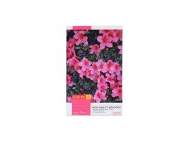CAMLIN NOTE BOOK SINGLE LINE SOFT COVER 172 PAGES (240X180 MM)