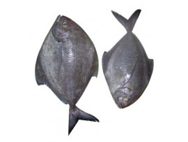BLACK AVOLI(POMFRET) (After cleaning qty will be less than ordered wt)