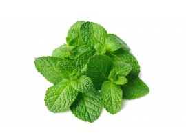 MINT LEAVES BUNCH (PUDHINAA)