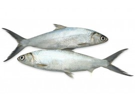 POOMEEN(MILKFISH) (After Cleaning qty will be less than ordered wt)