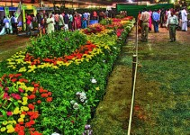 Flower show kochi