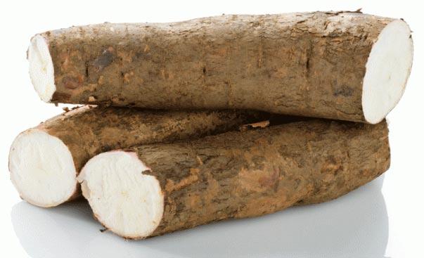 fresh-tapioca-1087573